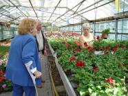 Grosse Auswahl an Topfblumen